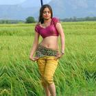 Hot Tollywood Beauty Sheena Shahabadi Photos and Wallpapers