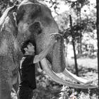 Vidyut Jammwal becomes elephant whisperer for 'Junglee'