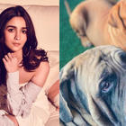 Ranbir Kapoor-Alia Bhatt take pet dog Lionel for walk amid coronavirus lockdown