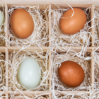 What is the Difference Between White and Brown Eggs?