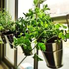 Perfect Plants and Herbs for Your Kitchen Garden.