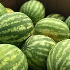 What is the Secret Behind Picking Perfect Watermelons Every Time?