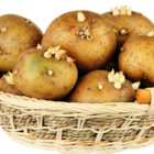 Should You Eat Sprouted Potatoes?