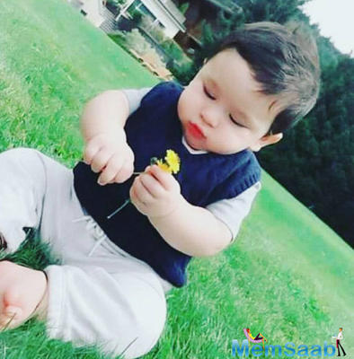 So adorable: Taimur Ali Khan holds a yellow flower is the cutest sight ever