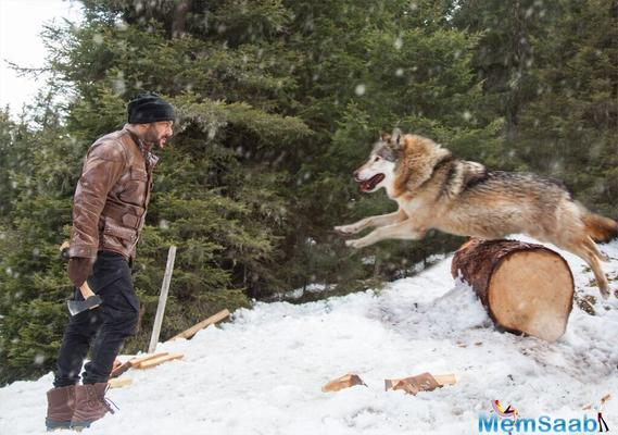 Tiger Zinda Hai: Salman Khan's deadly face-off with a wolf