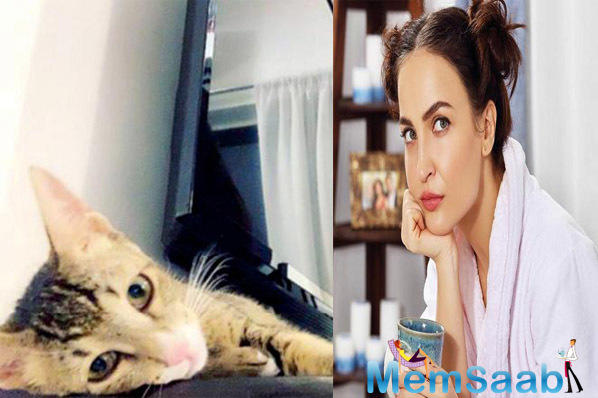 Elli AvrRam has a new addition to her family. The actor-anchor has adopted a stray cat, who has been named Charles. As it is her first pet, she is spending every waking moment with the feline. She now realises why cats make the best pets.