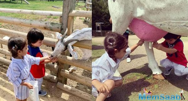 Taimur's day out at the farm: Kareena Kapoor's munchkin feeds a baby goat, milks a faux cow - pictures inside
