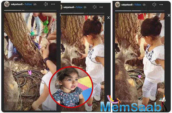 Yesterday, Soha shared the cutest video of Inaaya as she was feeding a baby kangaroo on her story.