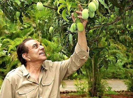 Dharmendra shares video with big bunch of bananas in his hand at farm house