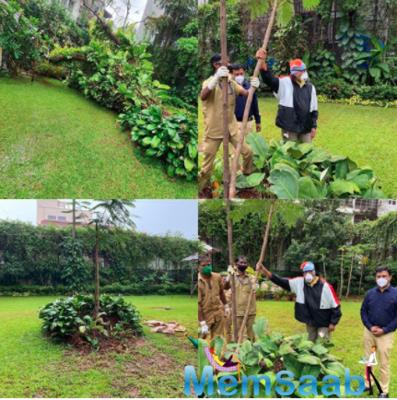 Amitabh Bachchan plants gulmohar sapling on mother Teji Bachchan's birth anniversary