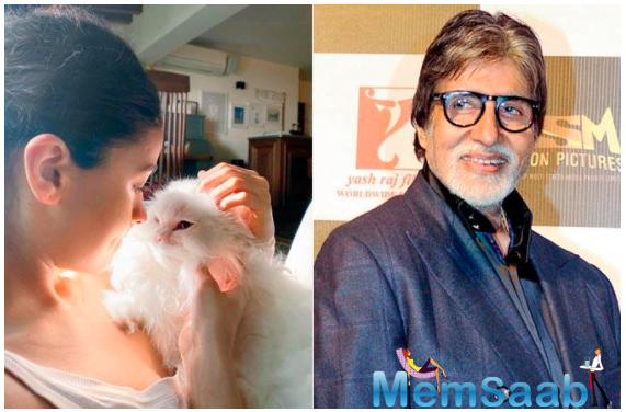 Purr with delight! Alia Bhatt's 'Muse' is too cute to be true