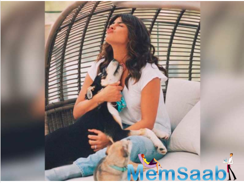 Missing her cute four-legged friend as she continues to shoot in London, actor Priyanka Chopra Jonas on Wednesday shared an adorable picture featuring her pet dog Panda.