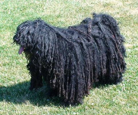The 5 Weirdest Dog Breeds Ever MemSaab.com