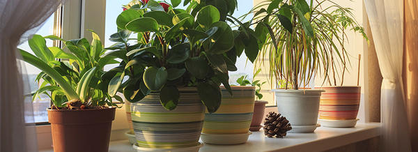 5 Houseplants that are Good for Your Health