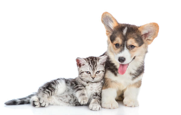 5 Reasons Why Every Family Should Have a Pet