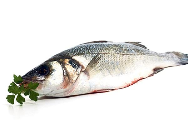 Is Fish Good Or Bad For You?