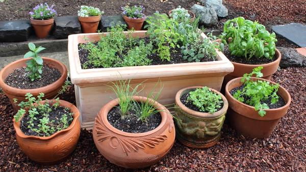 Do You Have A Kitchen Garden?