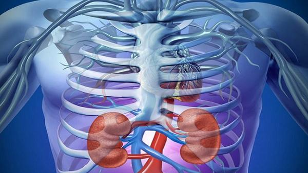 Tips to Protect Your Kidneys