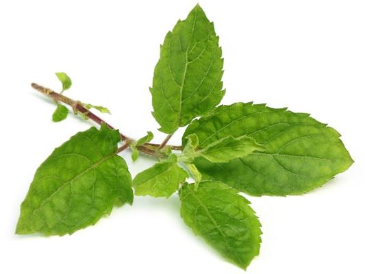 Health Benefits of Tulsi.