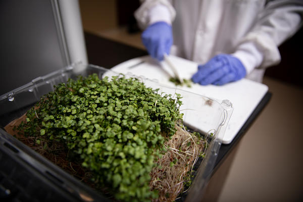 Microgreens: Nutrition in a Small Package!