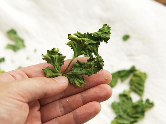 4 Herbs That Can Make Your Food Flavorful and Tastier.