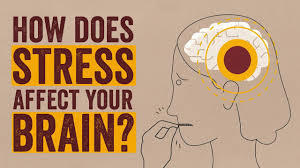 Effect of Stress on Your Brain