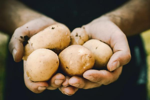 New Study Shows That People With Type 2 Diabetes Can Eat Potatoes