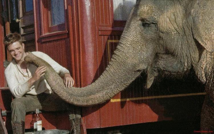 Robert Pattinson with Elephant cute still