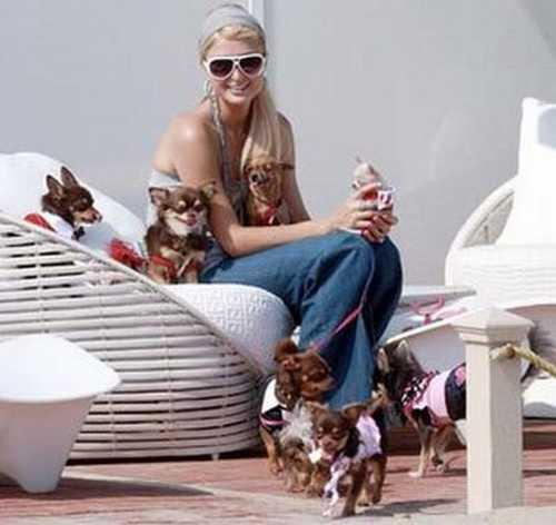 Paris Hilton latest cute wallpaper