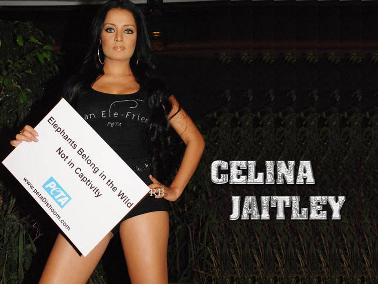 Hotty Celina Jaitley pics