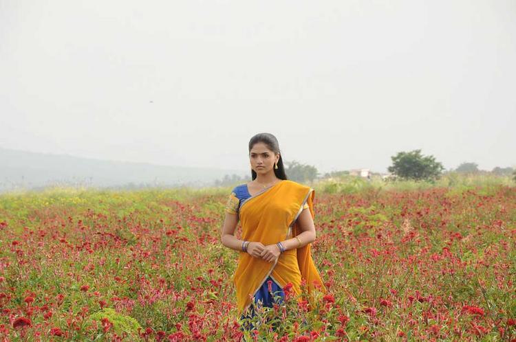 Sunaina Half Saree Still In Pandi Oli Perukki Nilayam