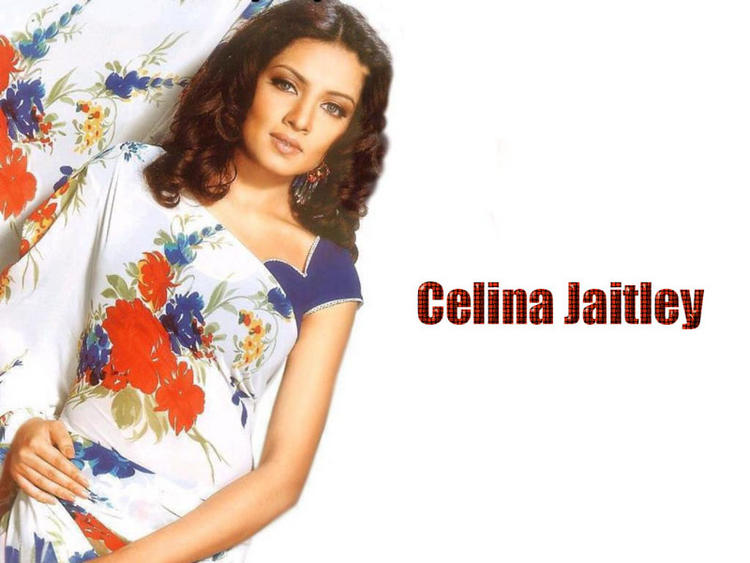 Celina Jaitley Dazzling Wallpaper In Saree
