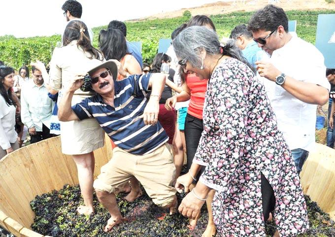 Celebs Stomps On Some Grapes At Nasik
