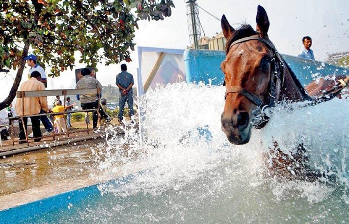A Horse Goes Through A Rigorous Training Routine Before The Race On Thursday