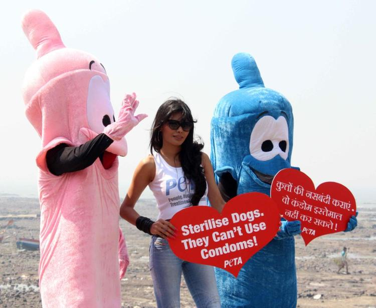 Sherlyn Chopra Posed At Promotion Of PETA's Safe Sex For Animals Campaign