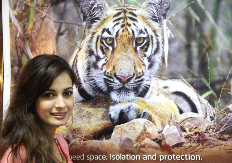 BollyWood Diva Dia Mirza At Save The Tiger Campaign