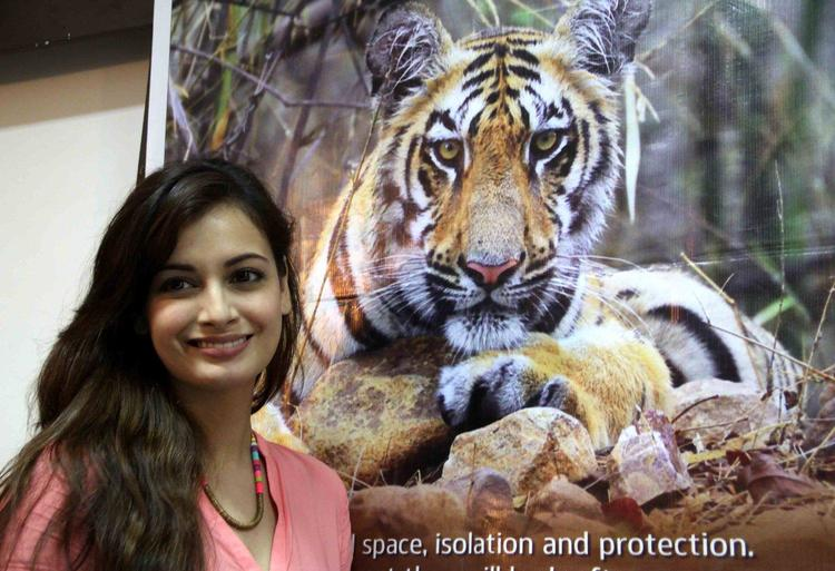 Former Beauty Queen Dia Mirza At The Promotion Of Save The Tiger Campaign