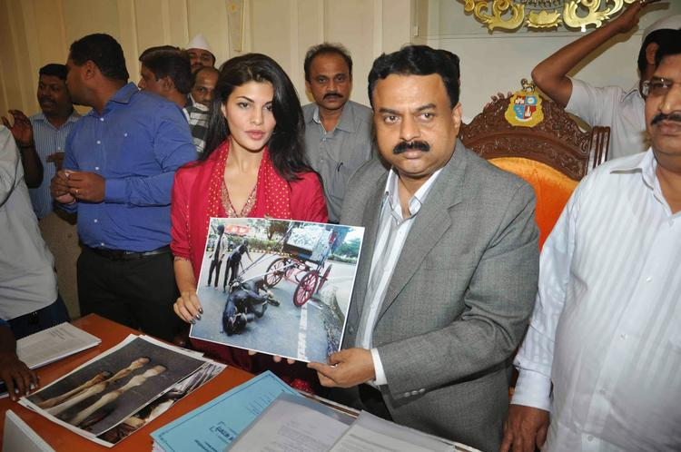 Jacqueline And Sunil The PETA To Ban Horse Carriages Event