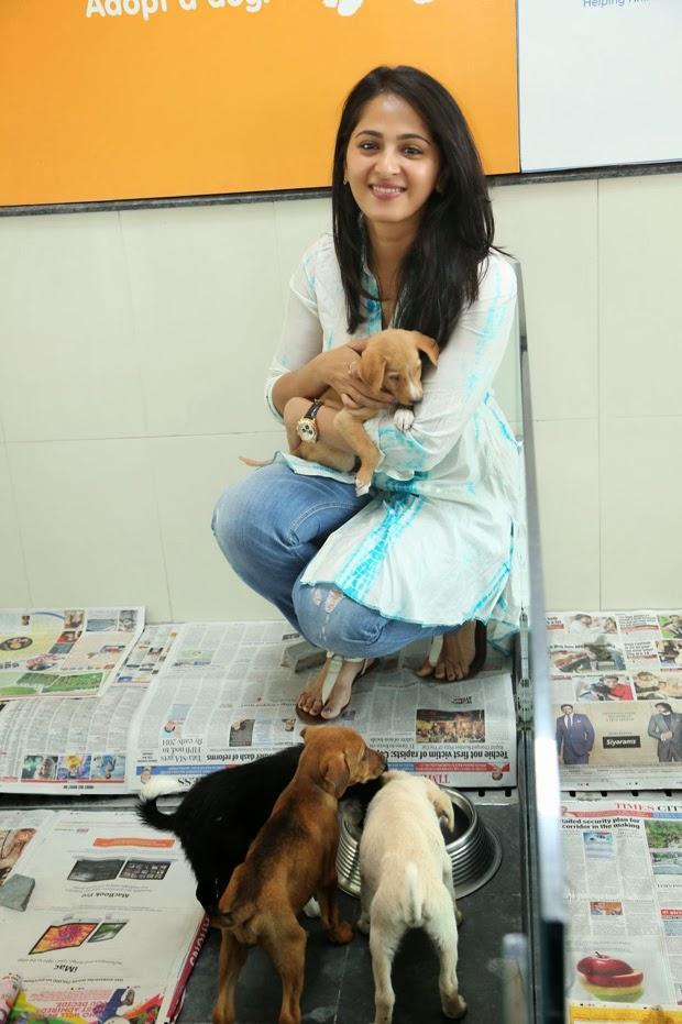 Anushka Shetty Nice Dazzling Look At Blue Cross Pet Carnival 2014 Event