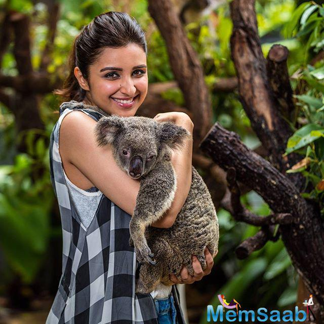 Parineeti pose with gorgeous koala, and said I am in love with this koala and made a new Aussie friend .