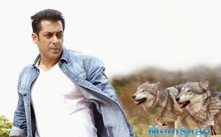 Currently, Salman Khan is in Austria shooting for Ali Abbas Zafar's 'Tiger Zinda Hai' alongside Katrina Kaif.