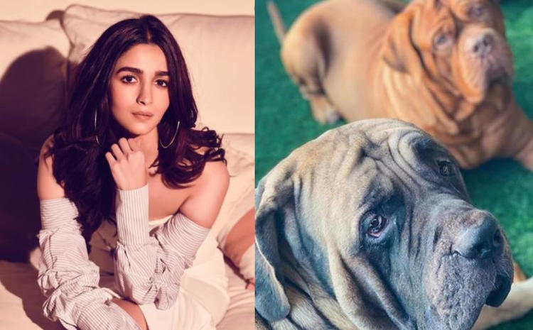 Recently Alia shared an image of Ranbir's pet dogs Lionel and Nido in the same frame