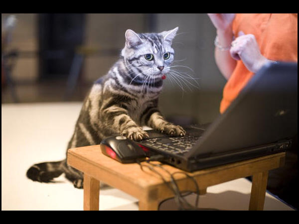 Action Cat working on CIA Computers