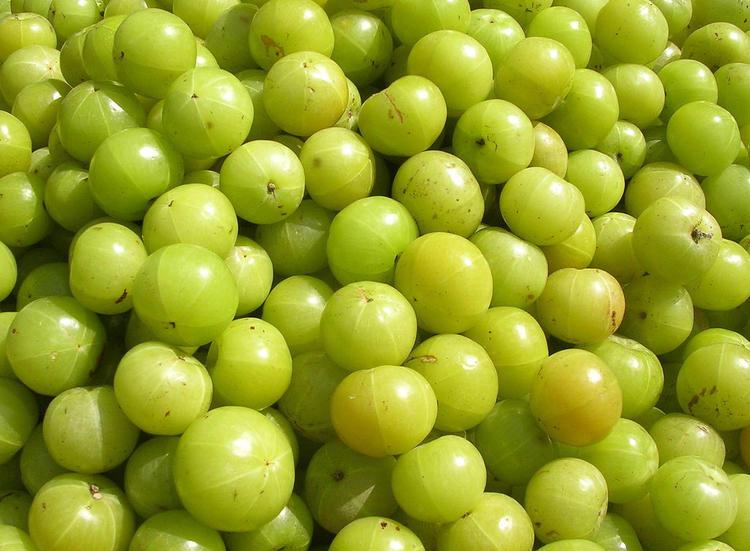 Benefits of Eating Amla (Gooseberry).